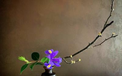 Primavera is here: la storia degli iris di cristina