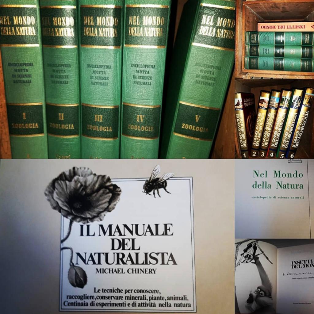 primavera la biblioteca della natura