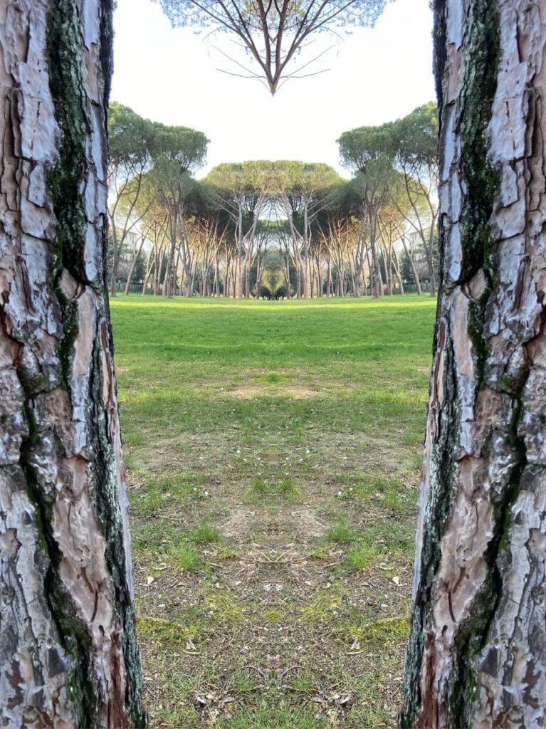 due passi al parco nella natura