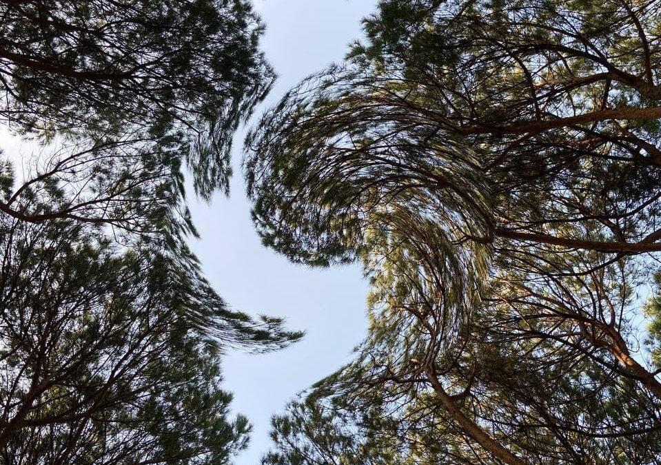 Due passi al Parco: Il Villon Puccini di Pistoia